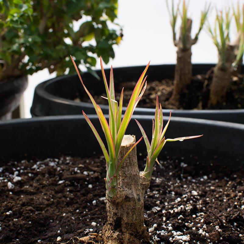 April 2021 - Pot Planting Month