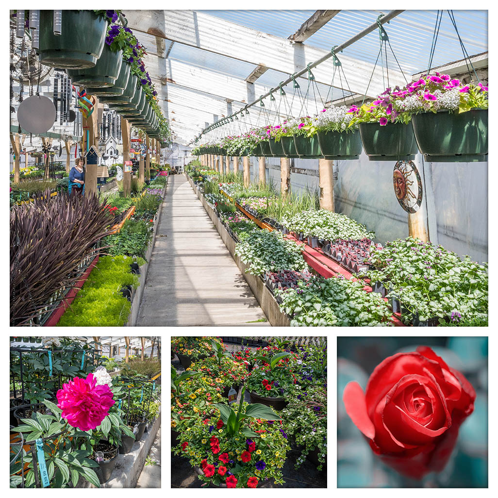 June - Perennials & National Roses Month